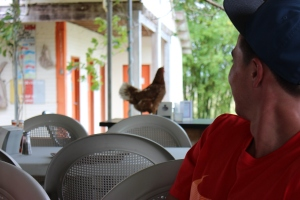 Was that a rooster on the table?